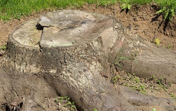 Dagenham tree stump removal costs