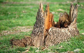 tree stump removal Dagenham, Barking Dagenham