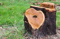 free Dagenham tree stump removal quotes